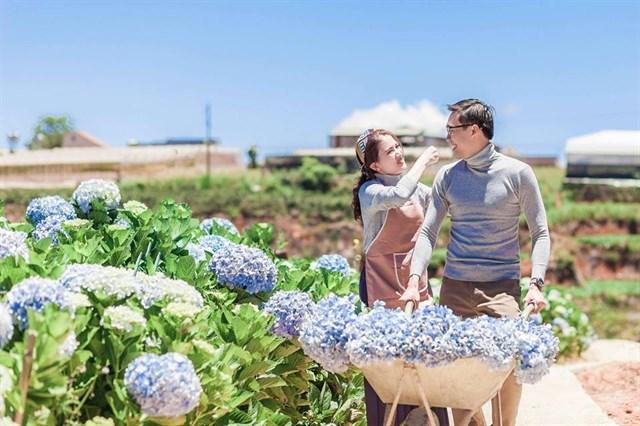 đường đi cánh đồng hoa cẩm tú cầu đà lạt - datphongdalat.vn