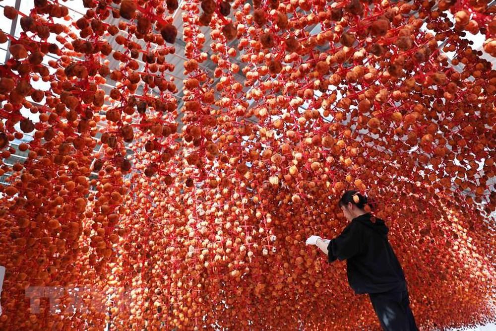 Hồng treo Đà Lạt với công nghệ từ Nhật Bản tạo nên những trái hồng treo thơm ngon.