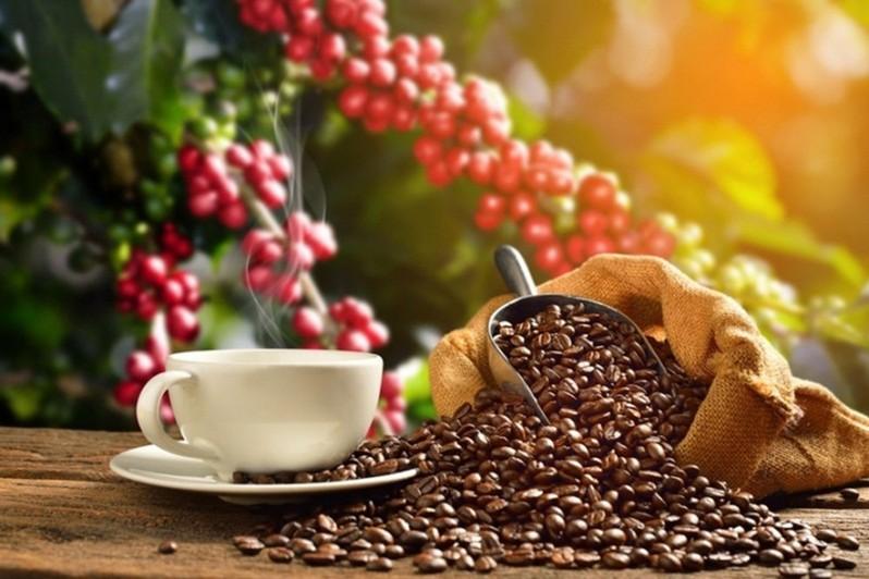 Những ly cà phê thơm ngon được thu hoạch và rang xay từ chính những hạt cà phê tại trang trại cà phê này. tour ngoại thành đà lạt 1 ngày thác voi chùa linh ẩn
