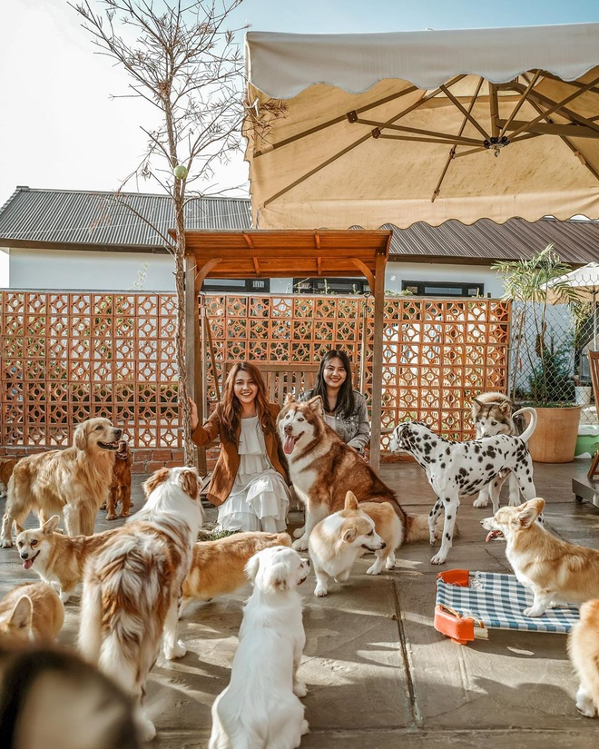 Những phút giây vui vẻ bên đàn cún tại trang trai cún Puppy farm Đà Lạt
