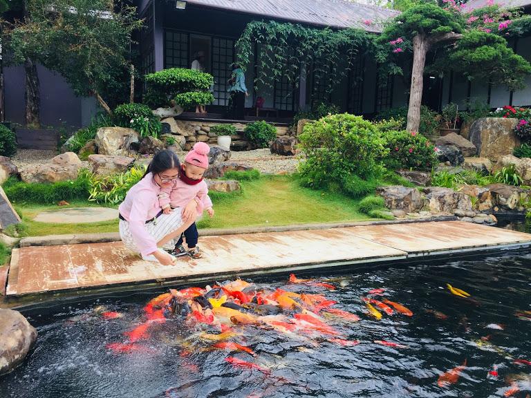 Hồ cá Koi đủ màu sắc tại Quê Garden Đà Lạt.