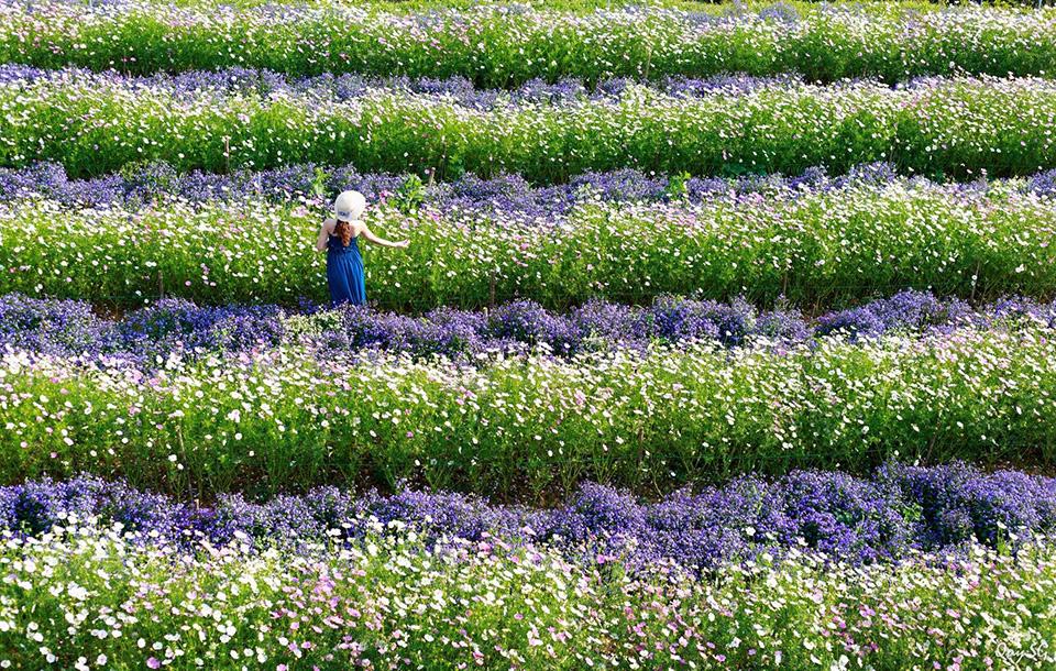 F cánh đồng hoa là nơi bạn có thể chụp cho mình những bức ảnh ảo diệu tour check in đà lạt những địa điểm hot nhất 2020