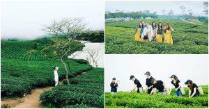 canh dong hoa lavender Da Lat - tour Da Lat 1 ngay - datphongdalat.vn -10