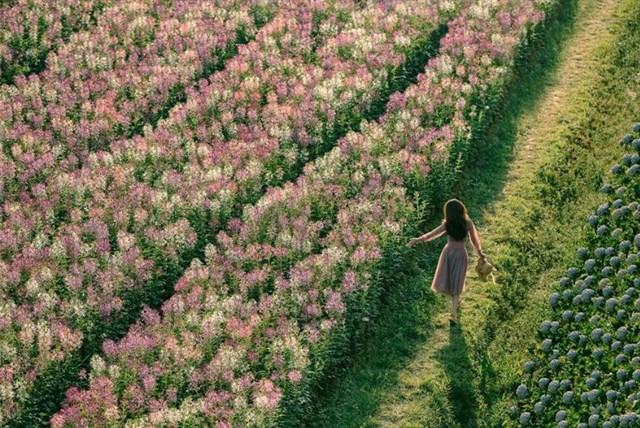 f cánh đồng hoa đà lạt tour check in đà lạt những địa điểm hot 2020