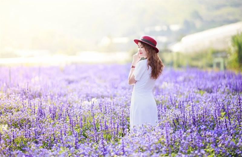F cánh đồng hoa Đà Lạt