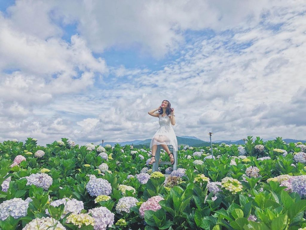 Vườn hoa Cẩm tú cầu Đà Lạt đẹp lung linh.