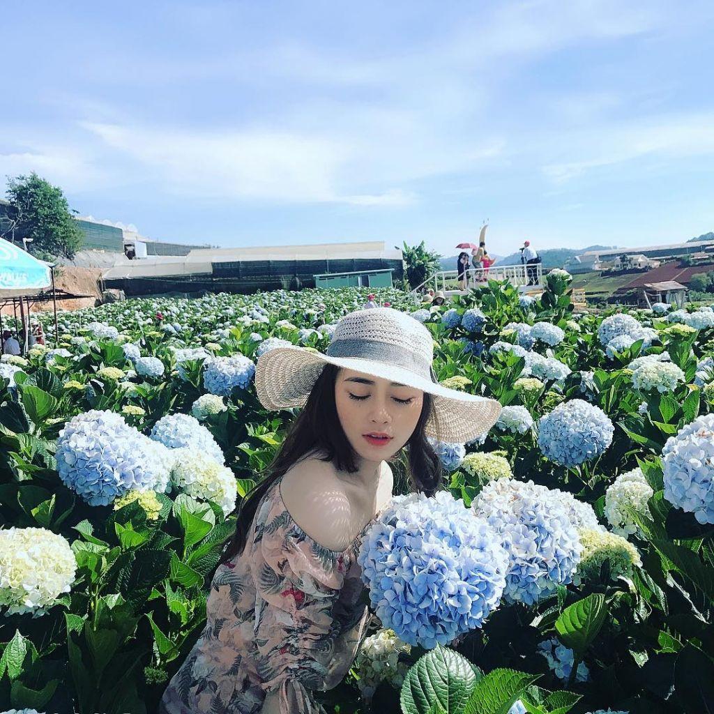Cánh đồng hoa Cẩm tú cầu nở rộ rực rỡ. tour Đà Lạt 1 ngày lạc lối thành phố hoa