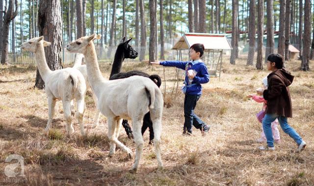 tour zoodoo đà lạt - tour tham quan sở thú zoodoo du lịch Đà Lạt tháng12 trong ngày - tourdalat1ngay.vn-2