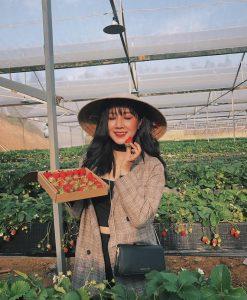 Bạn cũng có thể thăm vườn dâu tây công nghệ cao và tự tay hái nếm thử nhé!