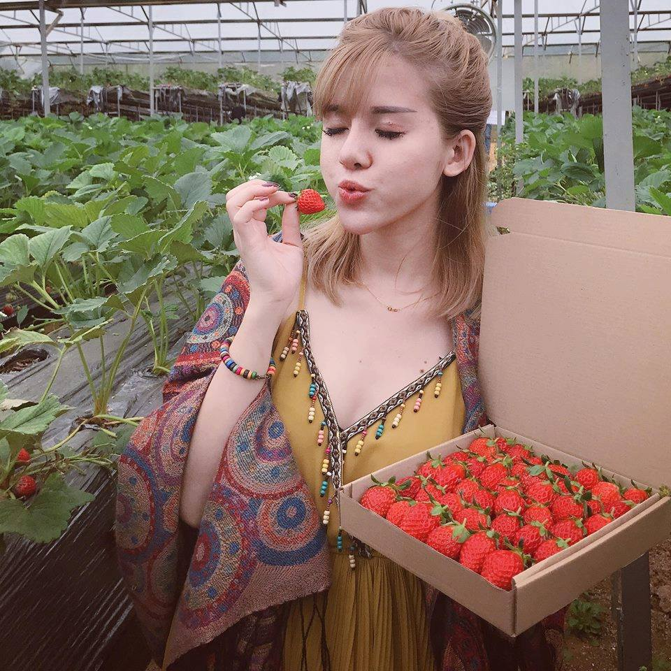Vườn dâu Đà Lạt với những trái dâu chín mọng, hấp dẫn.