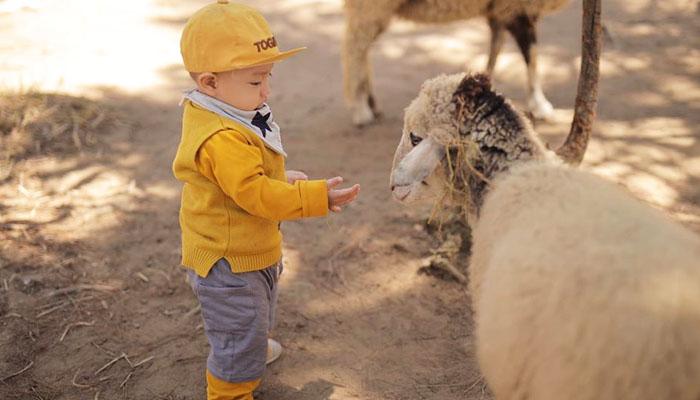 sở thú zoodoo đà lạt tour tham quan sở thú zoodoo đà lạt