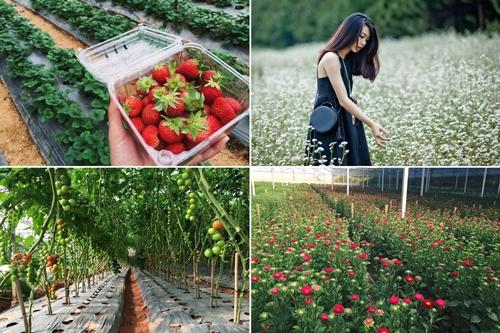 Tour du lịch nhà vườn Đà Lạt - Tour Đà Lạt 1 ngày giá rẻ - tourdalat1ngay.vn-01