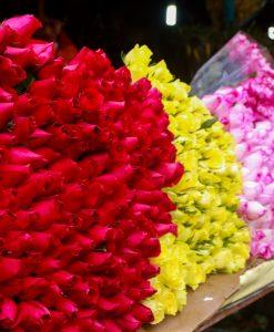 Hoa hồng nhà vườn tại Làng hoa Vạn Thành Đà Lạt tour ngoại thành đà lạt 1 ngày thác voi chùa linh ẩn