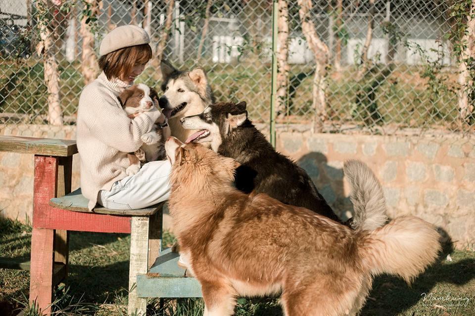 Nông trại cún Puppy farm Đà Lạt siêu dễ thương với nhiều giống quý hiếm
