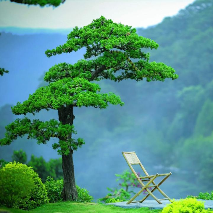 Góc chụp hình thần thánh tại Quê garden với khung cảnh rừng thông xanh ngát, yên bình.