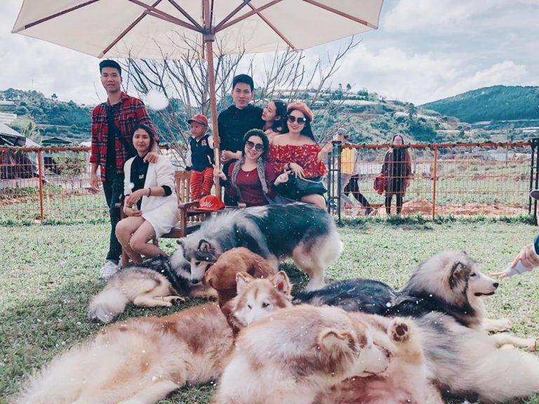 Hòa mình vào thiên nhiên chơi đùa cũng những chú cún thân thiện sẽ mang lại cho bạn cảm giác thích thú và thư giãn.
