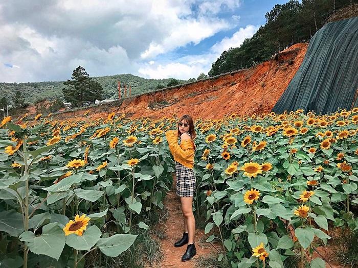 Chụp hình xinh xắn tại vườn hoa hướng dương - Nông trại cún Puppy farm Đà Lạt.