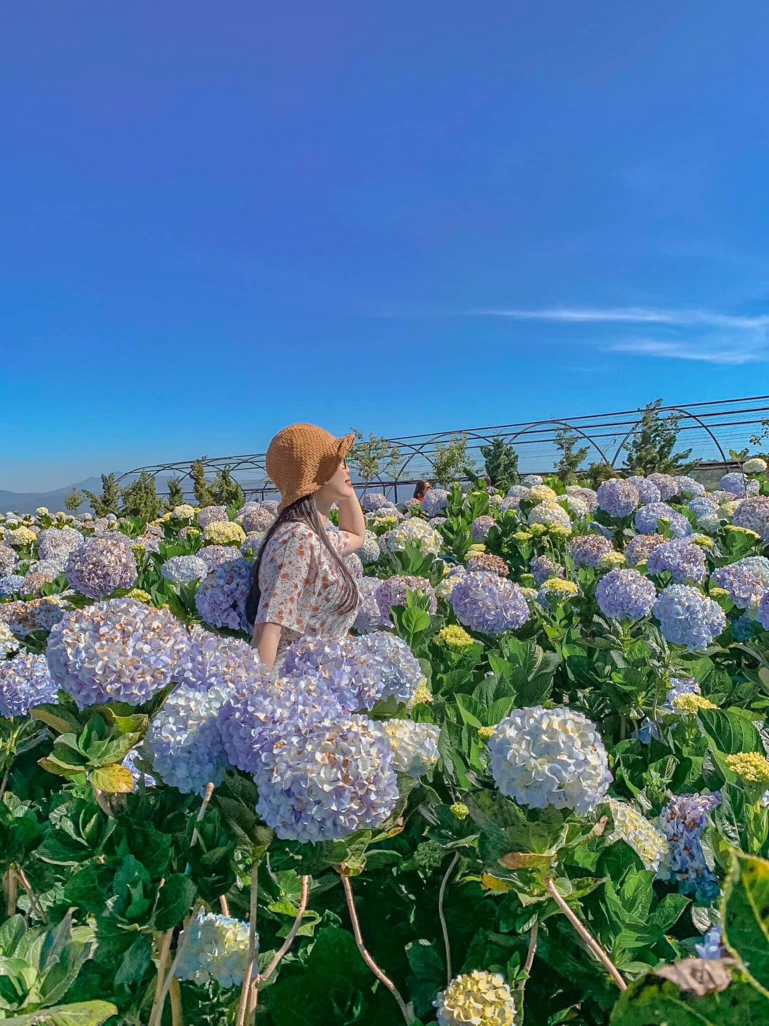 Vườn hoa Cẩm Tú Cầu là 1 trong những điểm check in cực hot tại Đà Lạt.