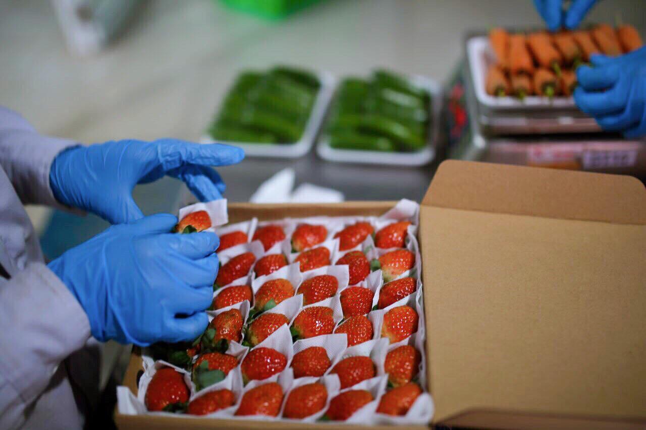 Những trái dâu chín mọng đang được đóng hộp tại nông trại Đồi chè Cầu Đất Đà Lạt