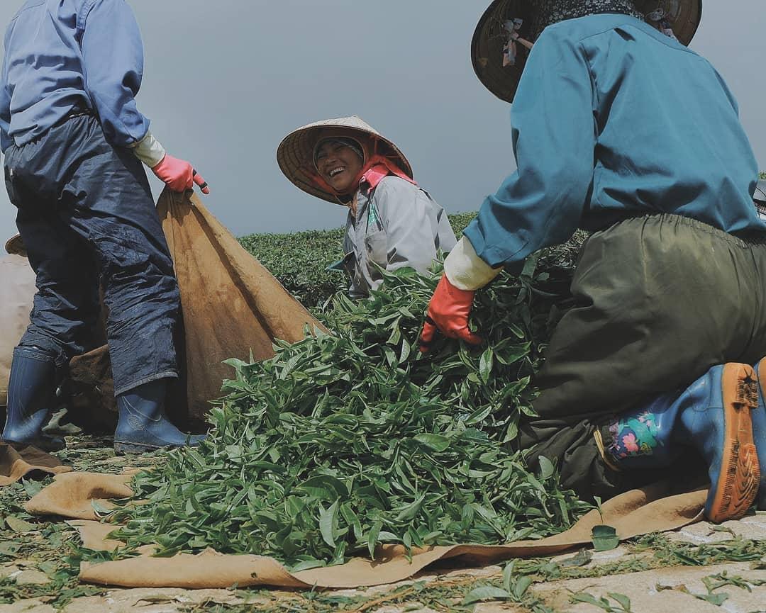 Nụ cười rạng rỡ của 1 nữ công nhân khi thu hoạch chè xong.