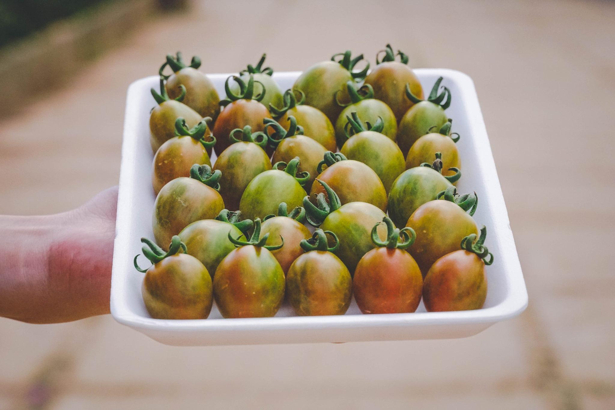 Những trái cà chua bi tại nông trại Đồi chè Cầu Đất Đà Lạt.