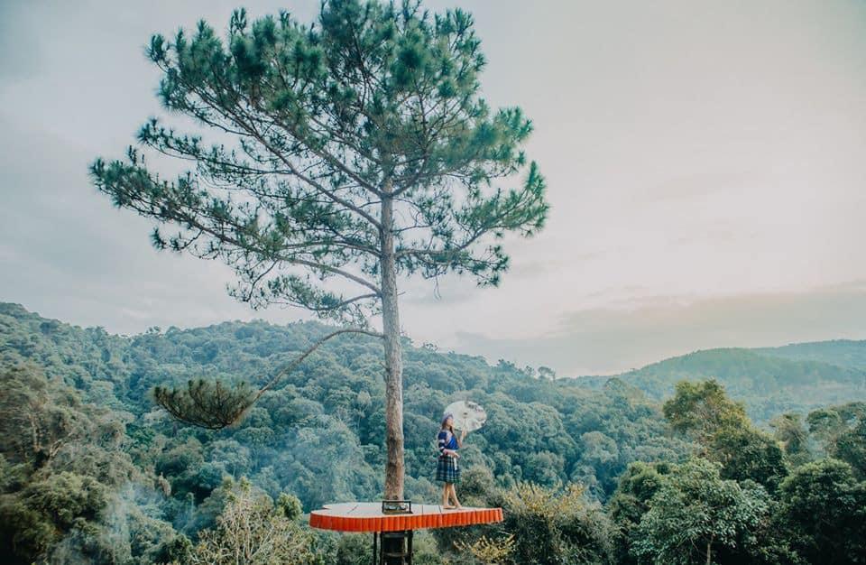 Trái tim lẻ loi bên cây thông cô đơn cực thu hút!
