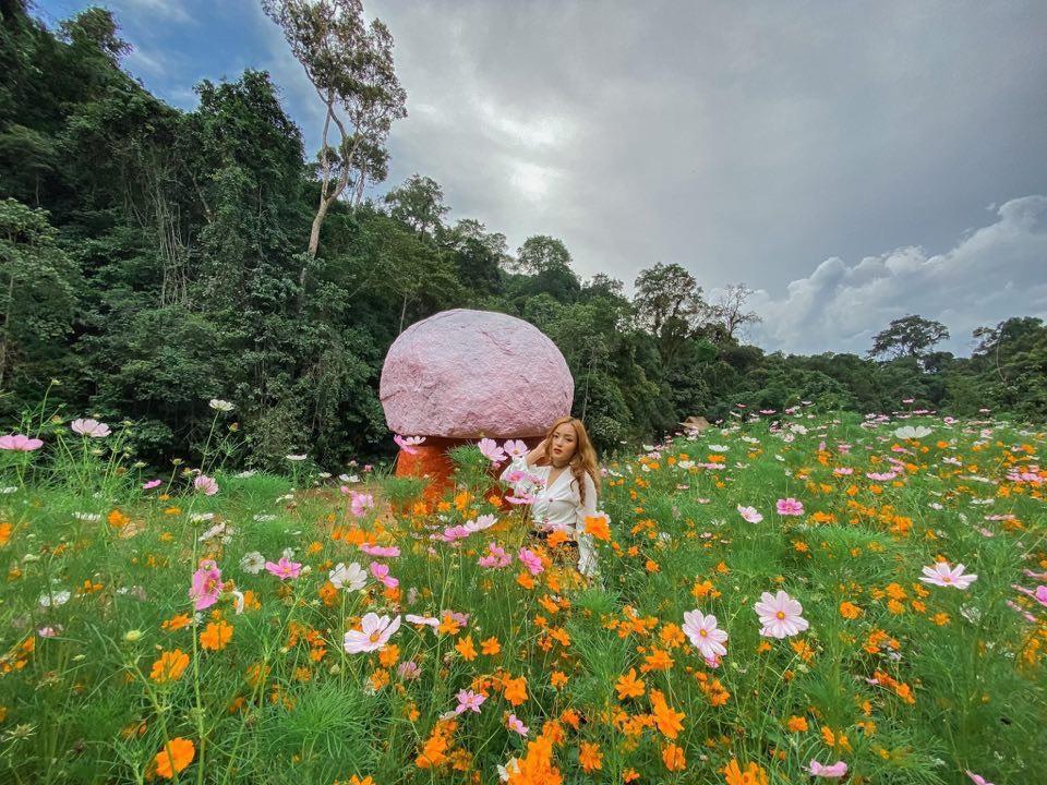 Ngắm nhìn trăm hoa cánh bướm đủ màu sắc nở rộ.