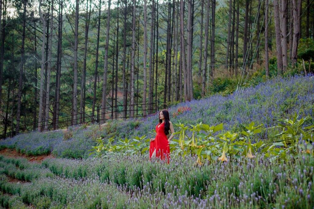 Thiếu nữ giữa rừng hoa Lavender tỏa hương thơm ngát.
