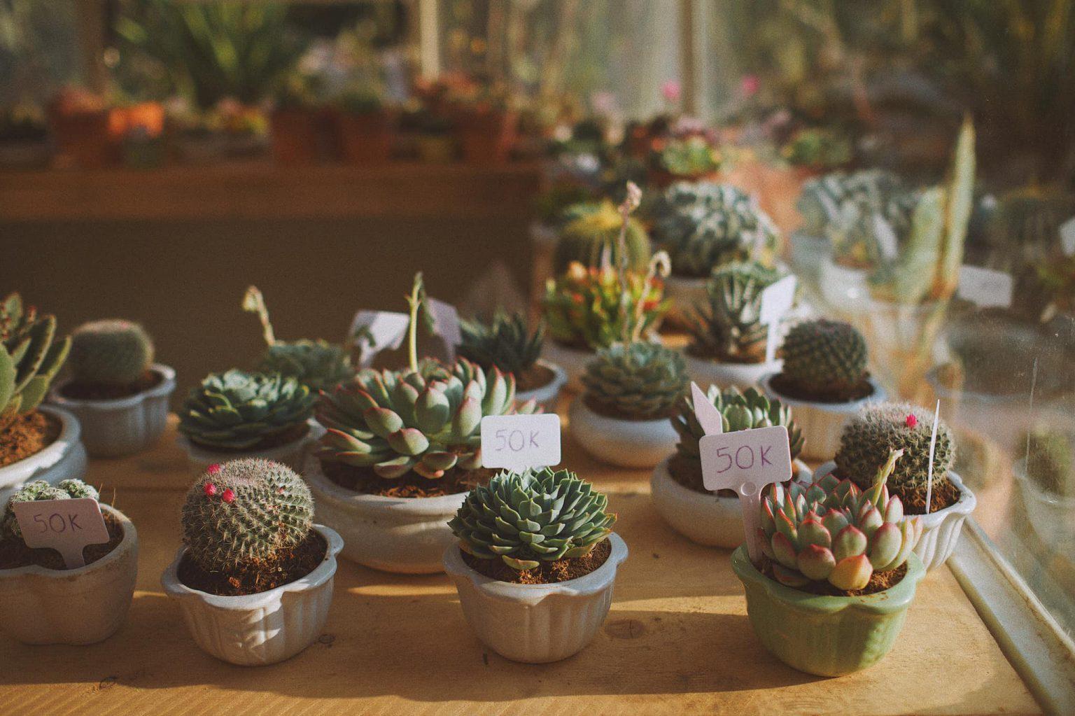 Vườn sen đá, xương rồng nhỏ nhắn bạn có thể mua về trang trí thêm cho khu vườn của mình nha.