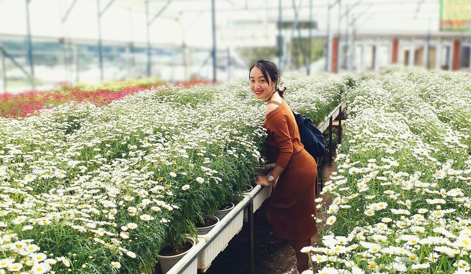 Những vạt hoa cúc họa mi trắng tinh khôi tại Khu du lịch rau hoa Vạn Thành.