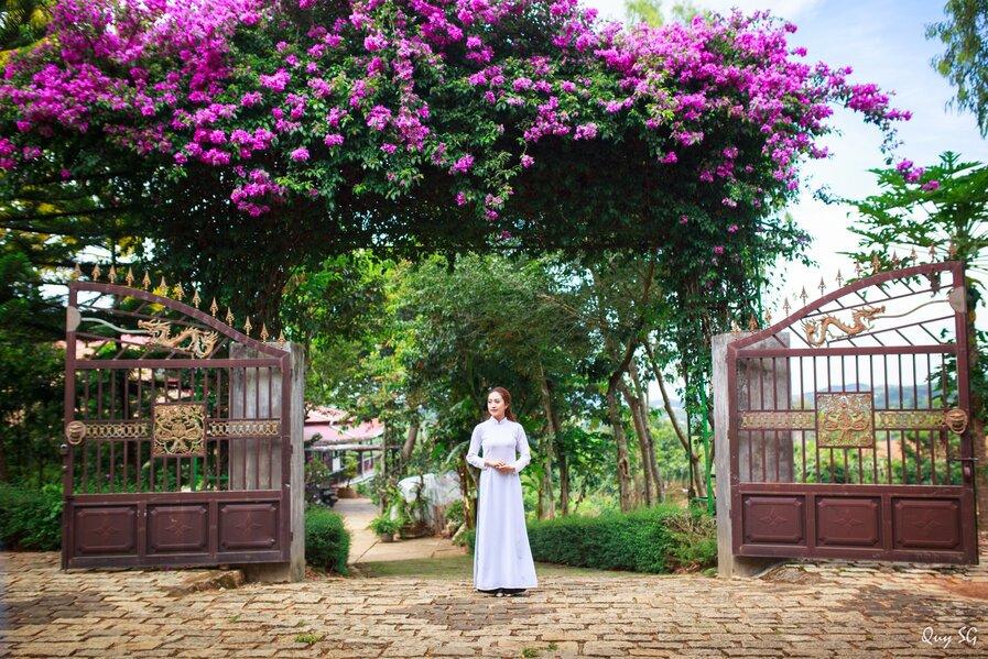 Dàn hoa giấy nở rộ trong khuôn viên chùa LInh Ẩn tạo nét đẹp thanh bình. Nguồn ảnh: Qui Sg.