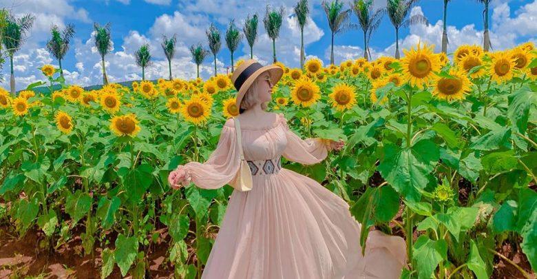 Cánh đồng hoa hướng dương tỏa nắng tại Mê Linh.