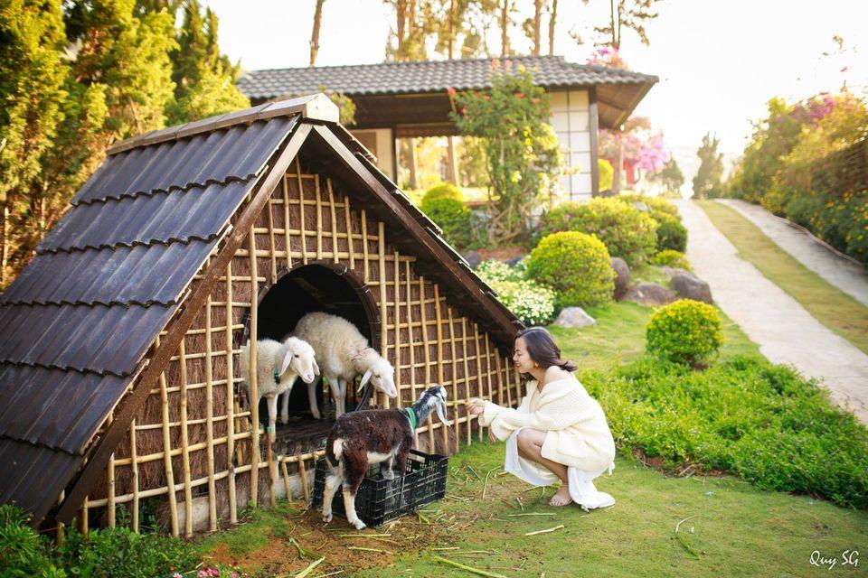 Cho những chú dê tinh nghịch tại Quê garden ăn nè!