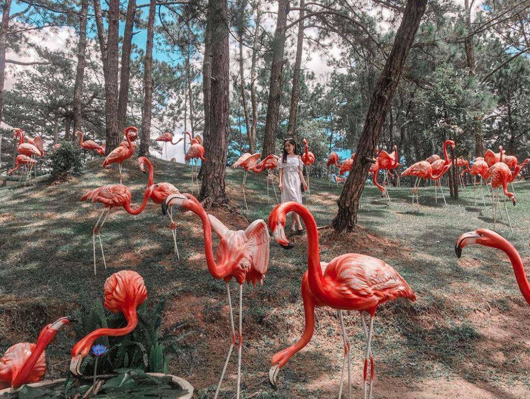 Thiên đường Hồng hạc sinh động tại thung lũng.