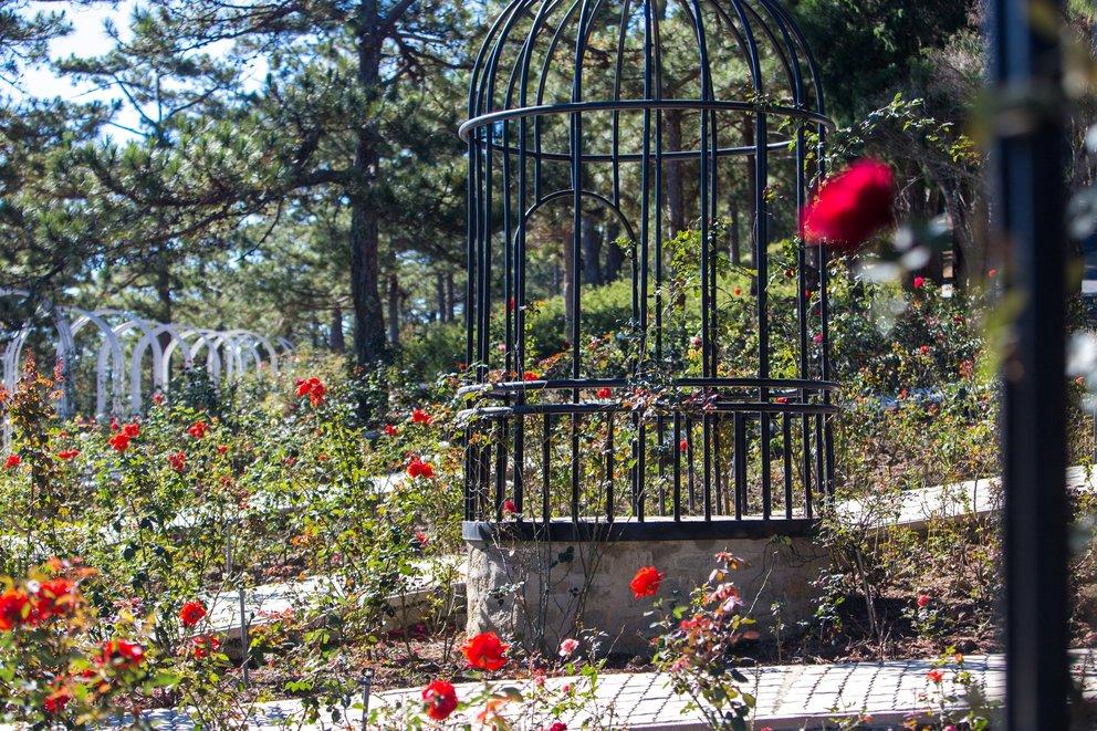 Vườn hồng trăm hoa khoe sắc cùng với tiểu cảnh lồng chim, tha hồ để bạn tạo dáng nhé!