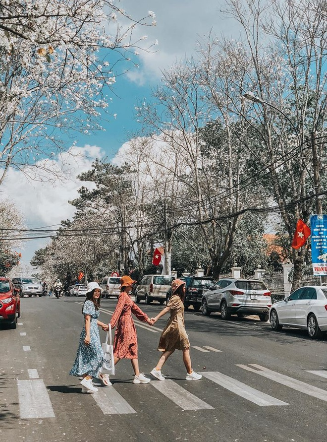 Tha hồ chụp hình check in trên những con đường hoa ban trắng nhé!